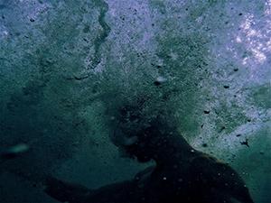 Moltedo Underwater