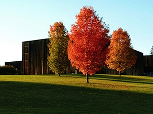 outside view of VAPA in the fall