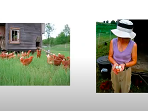 Image of chickens and a woman