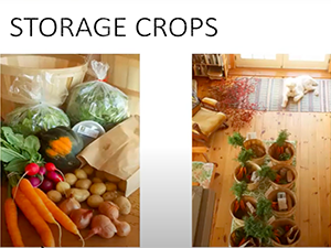 Image of storage crops