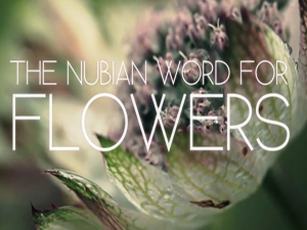 The Nubian Word for Flowers