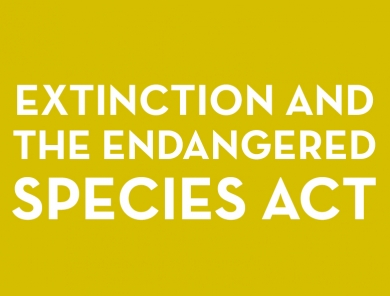 Extinction and the Endangered Species Act