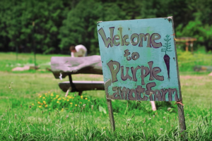 """Blue wooden """"Purple Carrot Farm"""" sign in front of green grass"""