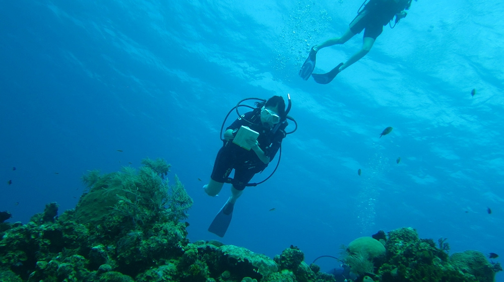 Students scuba diving to collect data on coral reefs