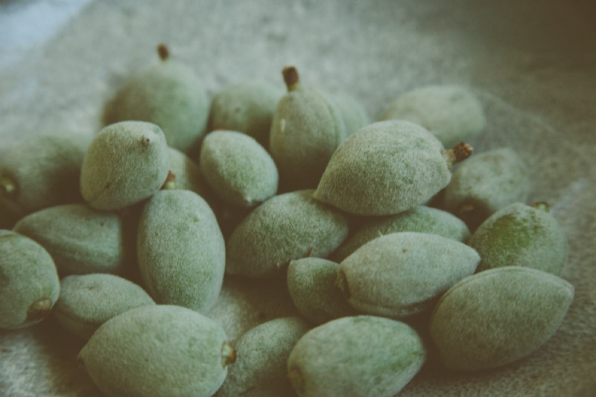 Andrew Barton -close up of green almonds